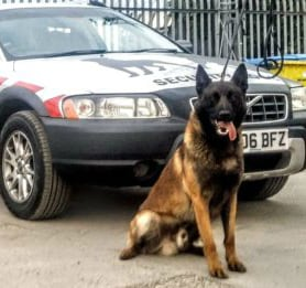 Security Dog and Pride GB vehicle
