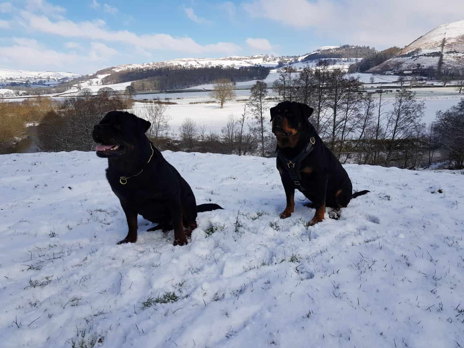 Pride GB trained dogs in the snow