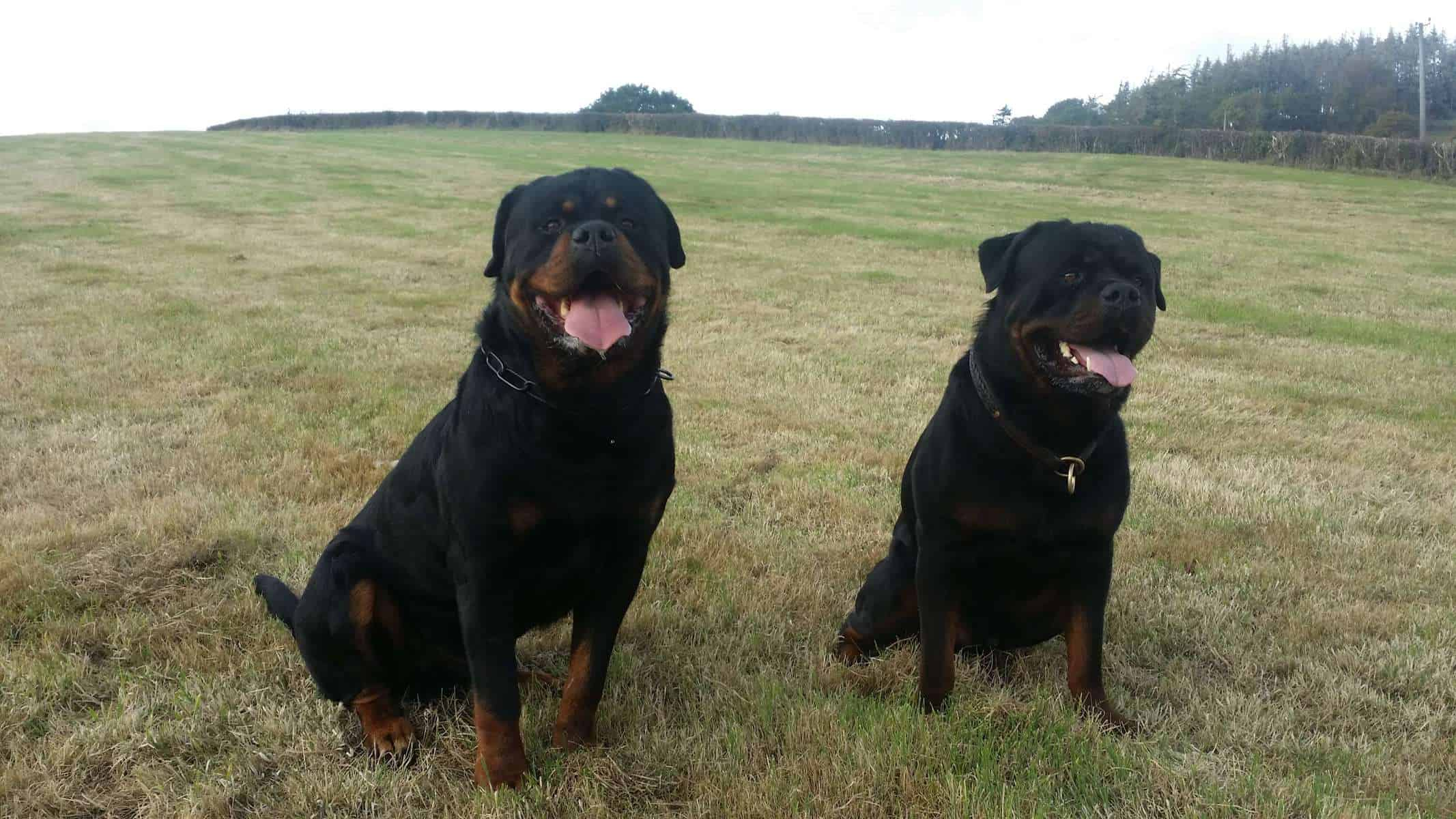 security dogs west midlands