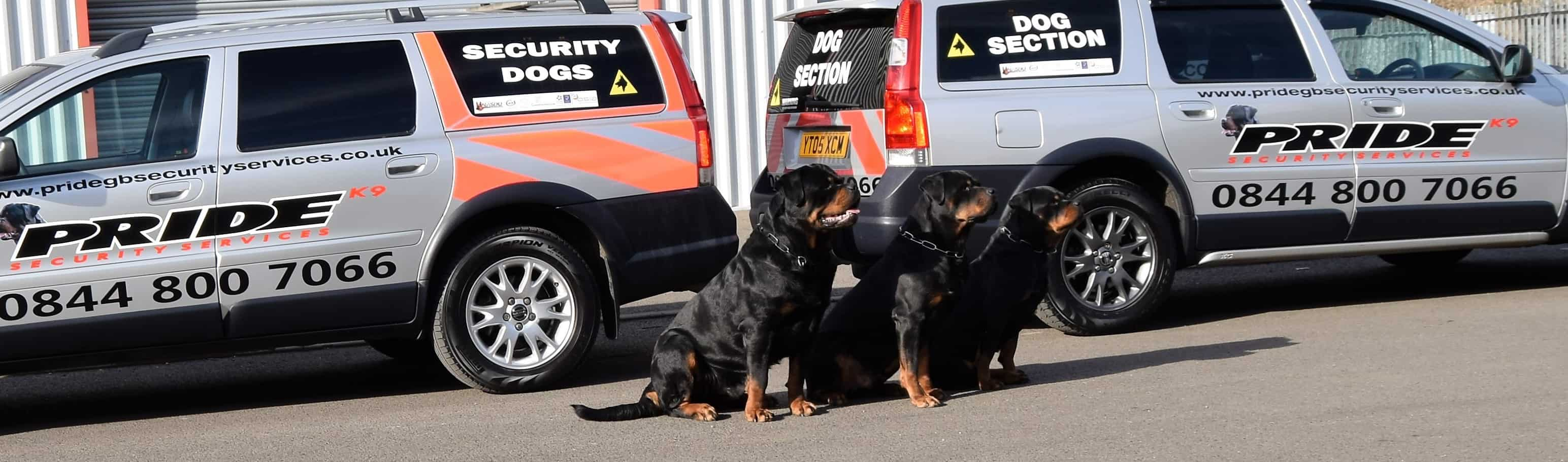 Security dog section