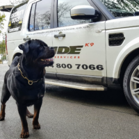 K9 Protection