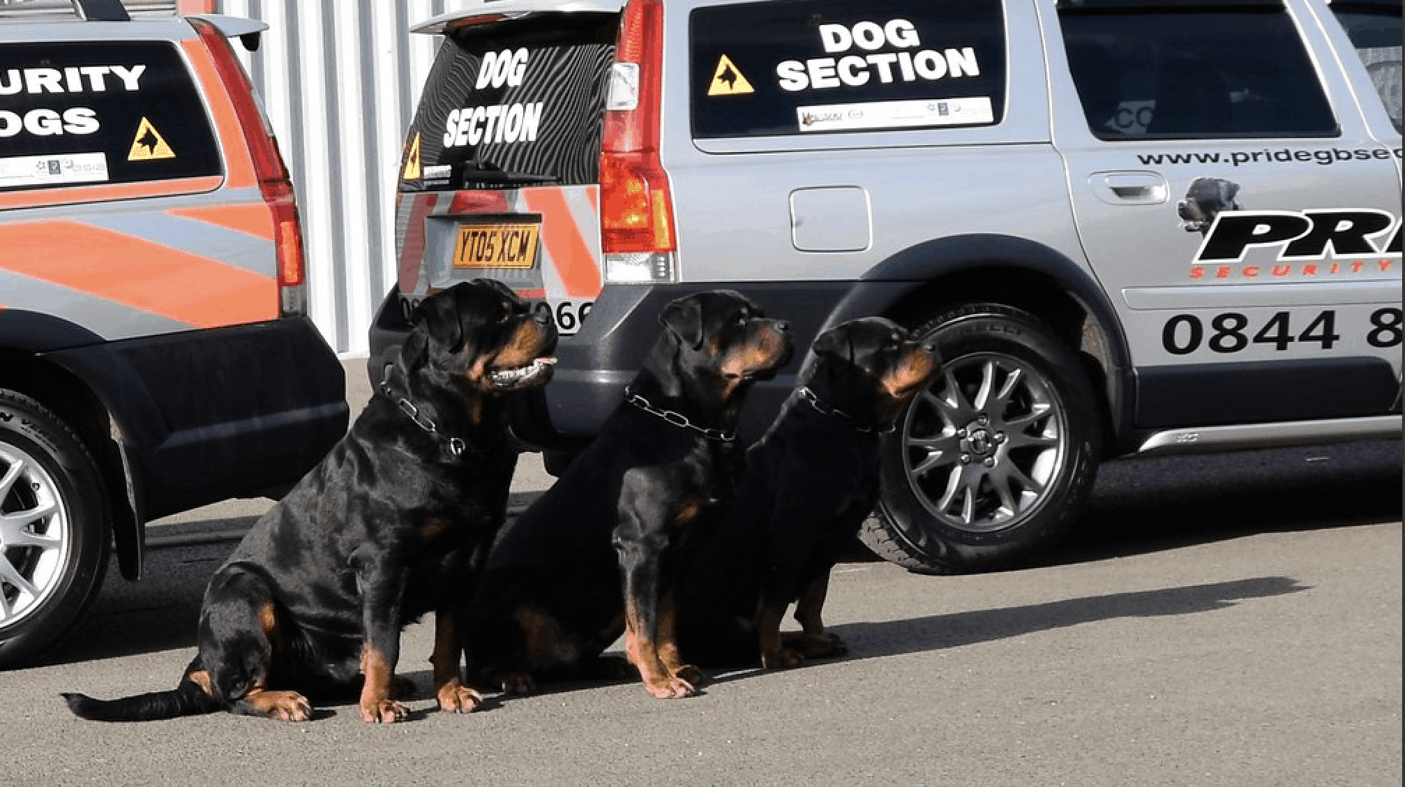 Pride GB dog section