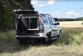 Dogs in the back of security vehicle