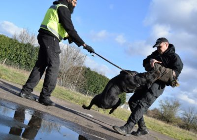 K9 Security Dogs Handlers Manchester