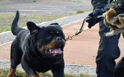 How to Train Security Dogs