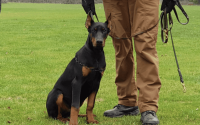 The Benefits Of Security Dog Handlers
